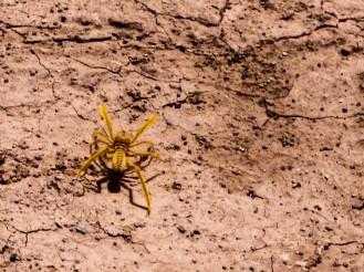 Spinne in der Lut