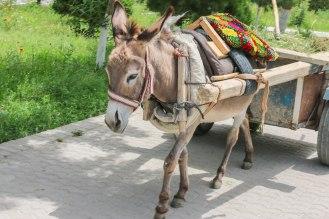 DAS LASTTIER in Usbekistan