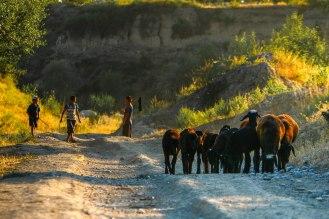 die Hirtenjungen treiben ihre Herde nach Hause