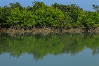in den Sundarbans