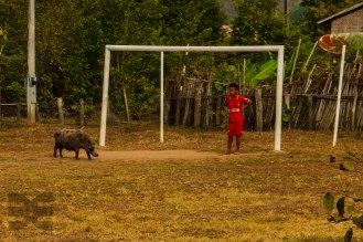 Fußballplatz und Viehweide