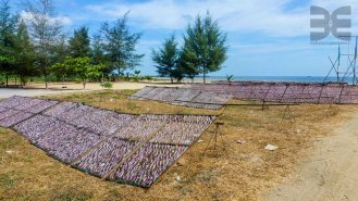 Tintenfischsaison in Pak Nam Pran