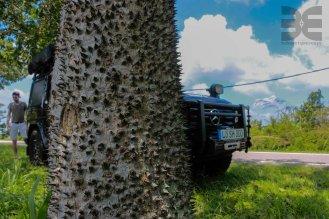 stacheliger Baum