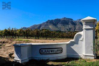 Weingut Blauuwklippen Stellenbosch Weinwanderung