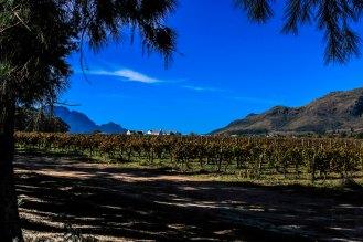 Stellenbosch Weinwanderung