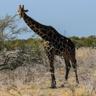 Wildlife in Etosha