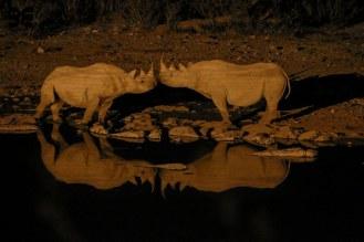 Wildlife in Etosha - Der Kuss