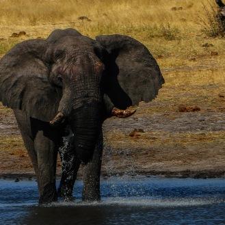 Wildlife Khaudum N. P.