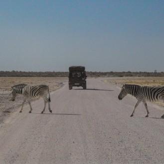 Wildlife in Etosha N. P.